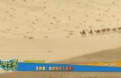 【黄河之滨也很美】王作宝:我把骆驼入画魂