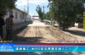 道路施工 4000亩瓜滞留瓜地(二)