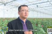 """[综艺体育-黄河之滨也很美]新区花卉产业 铺就特色""""花路"""""""