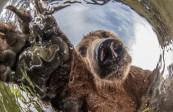 俄棕熊一家与水下照像机玩耍萌态十足