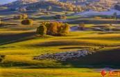 秋日的坝上草原,一旦错过就等于辜负了整个秋天