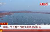 """【生態文明@濕地】""""鳥類大熊貓""""東方白鸛飛抵黃陂湖濕地"""