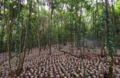 贵州林下经济产值超220亿元,覆盖贫困人口48.9万人
