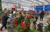 【视频】| 春节逛花市 兰州新区花卉交易中心人气旺