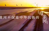 跟着总书记的考察足迹|在这里,黄河入海,飞鸟翔集