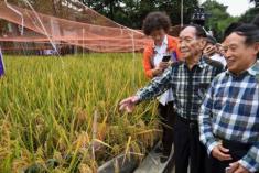 袁隆平團隊又有好消息 長江中游雙季稻畝產1365公斤