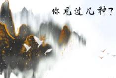 蘭州黃(huang)河上的鳥類精靈,你見過幾種?