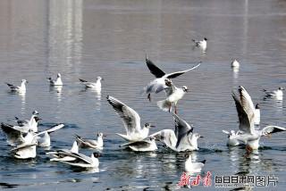 三月好春光 鸥舞刘家峡