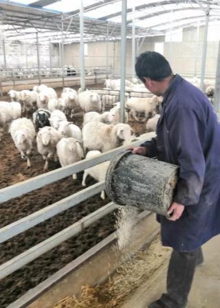蘭州新區引導合作社激發農業農村發展新動能