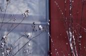 最|愛蘭州  春雪滿空來,觸處似花開!