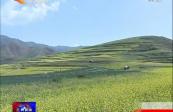 榆中:千亩油菜花开美景如画 赏花正当时
